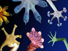 Biomimicry_Image 01