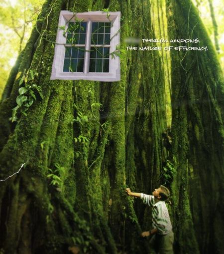 Window in a Tree
